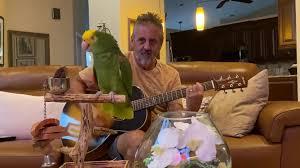Double Yellow Head Parrot Tico