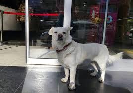 飼い主を病院の外で待つ犬