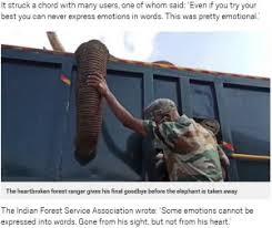 力なく垂れるゾウの鼻に触れ、すすり泣く男性の姿