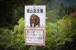 熊の警告看板