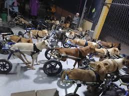 80万頭以上の野良犬に「第二の人生を!」