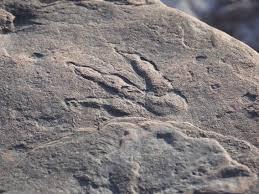 2億2千万年前の恐竜の足跡