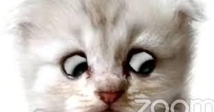 敏腕弁護士Zoomでの裁判に子猫の姿で登場