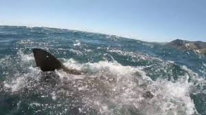 サメに奪われ腕を失いかける