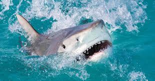 手に持っていた魚を襲ったサメ