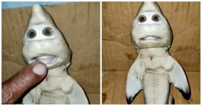 「ニンジャ・タートルズ」のようなサメの胎