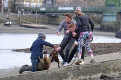 英テムズ川で人気者だったアザラシが安楽死