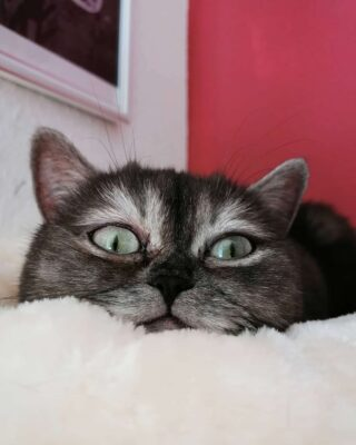 ブサイクと呼ばれた野良猫ビーン