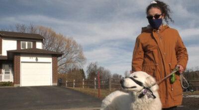 散歩中に飼い主が発作、走行中の車を止めて助けを求めた犬