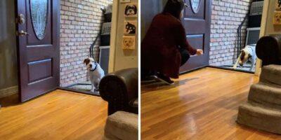 家の中に入ることを躊躇する保護犬