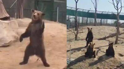 河南省周口市にある野生動物園のクマ