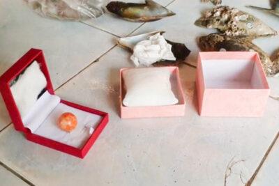 稀少価値の高い天然真珠「メロパール」