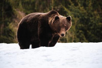 ルーマニアのリゾートでクマに追跡された。
