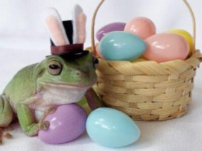 チョコレート会社のマスコットにカエルが抜擢 初の両生類採用