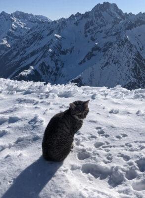 標高3000メートルの雪山で迷子になった猫