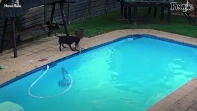 溺れる仲間を34分間かけて救出した保護犬