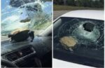 米フロリダ州ボルーシャ郡で高速道路を走行中の車にカメが直撃