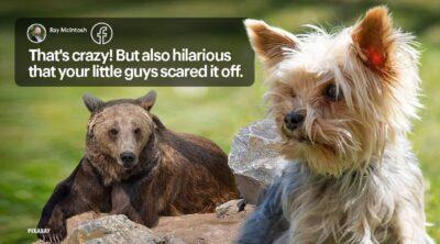 家に侵入した野生のクマ 小さくて優秀な番犬2匹に威嚇されて走り去る