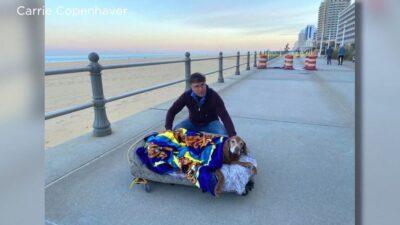 寿命が迫り歩けなくなった高齢犬 飼い主が可動式ベッドを作り最後に大好きな海へ