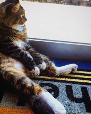 お金を持ち込むネコ「はCASHnipキティ」