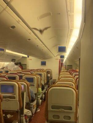 飛行中の機内をコウモリが飛び回る