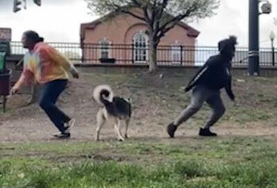 愛犬の忠誠心(信頼度)を測るテスト。
