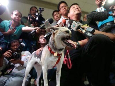 フィリピン出身のヒーロー犬、カバンが13歳で睡眠中に死去
