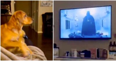 初めて見たダース・ベイダーに怯える犬