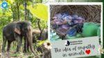 野生のゾウが大暴れ 300本以上のバナナの木をなぎ倒す