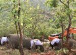 インド18頭のゾウの死のミステリー、ほんとに「雷に打たれた」のか?