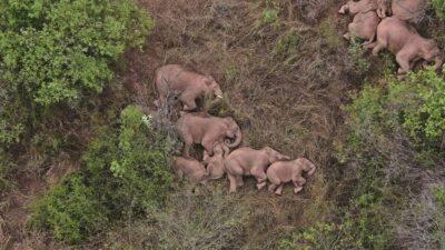 傷を負った子ゾウを100人がかりで救助