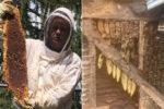 引っ越した家の壁の中から45万匹のハチ