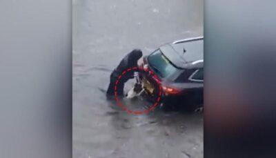 洪水の中、浸水した車を押して危機から救った犬