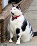 肥満猫キース(Keith)