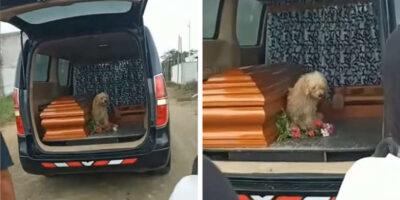 亡くなった飼い主の棺のそばを離れない犬!