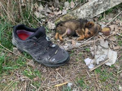 セルビアで靴を寝床に生き延びた子犬スメステン